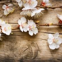 flower-گل (153)