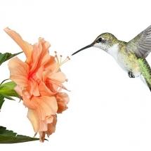 flower-گل (157)