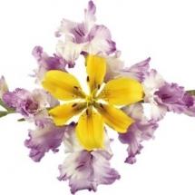 flower-گل (158)
