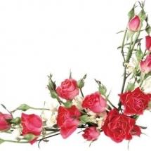 flower-گل (159)