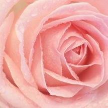 flower-گل (16)