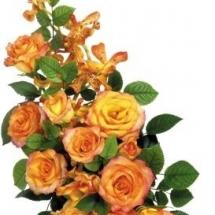 flower-گل (161)