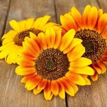 flower-گل (164)