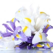 flower-گل (165)