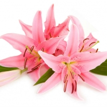 flower-گل (166)