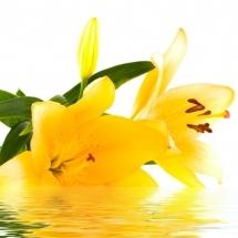 flower-گل (167)