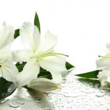 flower-گل (168)