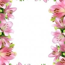 flower-گل (17)