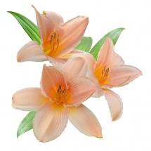 flower-گل (170)