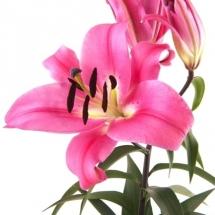 flower-گل (171)