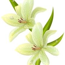 flower-گل (172)