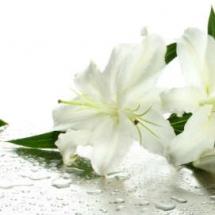 flower-گل (173)