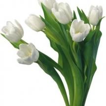 flower-گل (174)