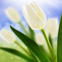 flower-گل (176)