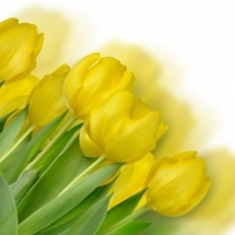 flower-گل (177)