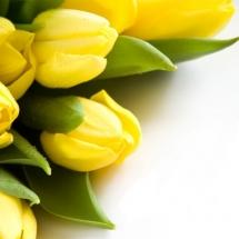 flower-گل (178)