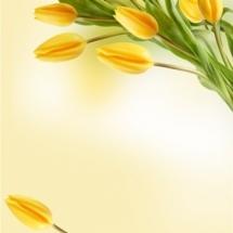 flower-گل (179)