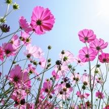 flower-گل (18)