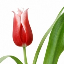 flower-گل (180)