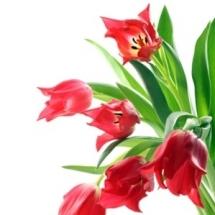 flower-گل (181)