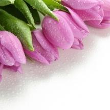 flower-گل (183)