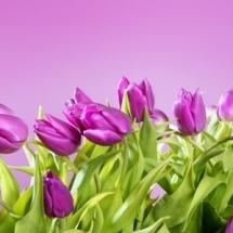 flower-گل (185)