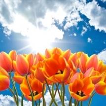 flower-گل (186)