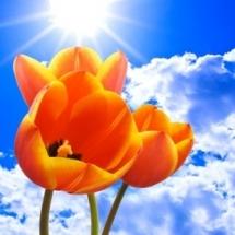 flower-گل (187)