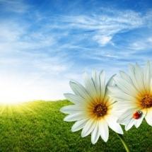 flower-گل (188)