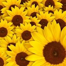 flower-گل (193)