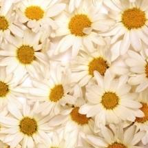 flower-گل (194)