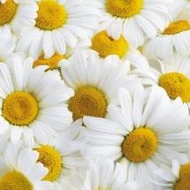 flower-گل (195)
