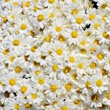 flower-گل (196)