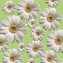flower-گل (198)
