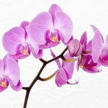 flower-گل (2)