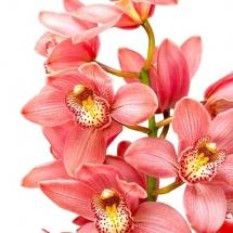flower-گل (20)