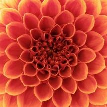 flower-گل (202)