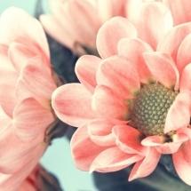 flower-گل (203)
