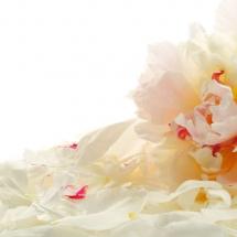 flower-گل (205)