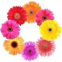 flower-گل (208)