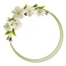 flower-گل (209)
