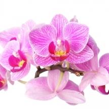 flower-گل (21)