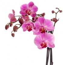 flower-گل (22)