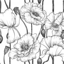 flower-گل (224)