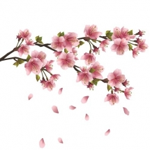 flower-گل (228)