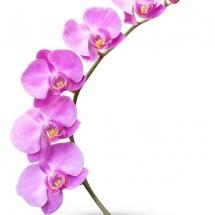 flower-گل (23)