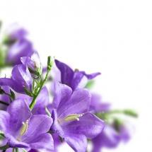 flower-گل (230)
