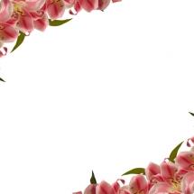 flower-گل (231)