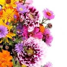 flower-گل (232)