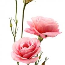 flower-گل (234)